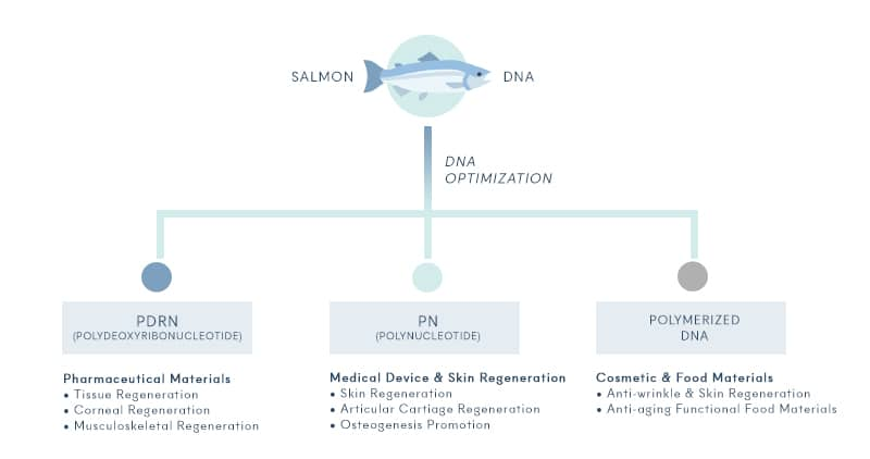 PDRN, PN, Rejuran, made of salmon DNA