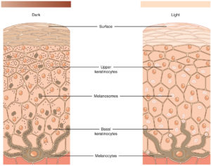 how pigmentation forms